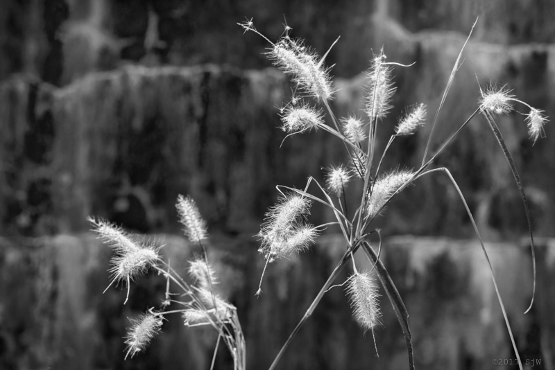 Dried grass in the sunlight