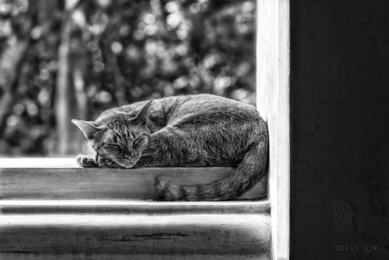 A cat sleeping in a window in a pavilion at Phra Nakhon Khiri