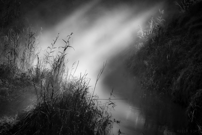 Sunlight shining through mist on to reeds